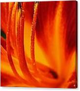 Blazing Lily Canvas Print