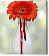 Bleeding Gerbera Canvas Print