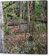 Blending Deer Canvas Print