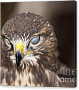 Blind Buzzard Canvas Print