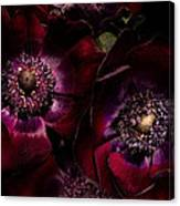 Blood Red Anemones Canvas Print