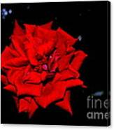 Blood Rose Canvas Print