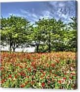Bloomed Poppy Canvas Print