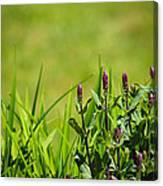 Blooming In Purple Canvas Print