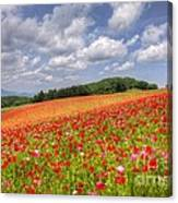 Blooming In The Plateau Canvas Print