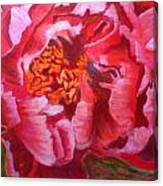 Blooming Peony Canvas Print