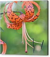 Blooming Tiger Canvas Print