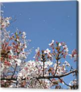 Blossom 4 Canvas Print