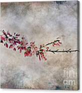 Blossom Branch Canvas Print