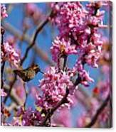 Blossoming Bird Canvas Print