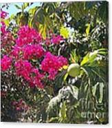 Blossoms And Breadfruit Canvas Print