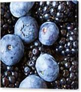 Blue And Black Berries Canvas Print
