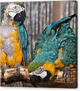 Blue And Gold Macaw Pair Canvas Print