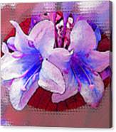 Blue And Red Weigela Window Canvas Print