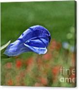 Blue Beacon Canvas Print