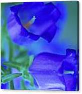 Blue Bell Flowers Canvas Print