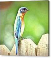 Blue Bird Canvas Print