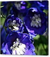 Blue Blossoms Canvas Print