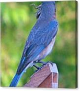 Blue Boy My Yard Bird Canvas Print