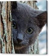 Russian Blue,cat  Canvas Print