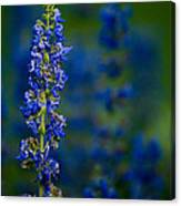 Blue Bunny Canvas Print