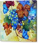 Blue Butterflies And Grapevine  Canvas Print