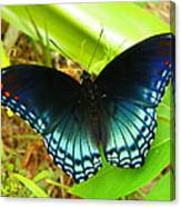 Blue Butterfly I Canvas Print