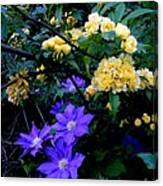Blue Clematis With Yellow Lady Banks Rose Canvas Print