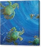 Blue Crab Run Canvas Print