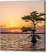 Blue Cypress Lake Sunrise Canvas Print