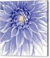 Blue Dahlia Canvas Print