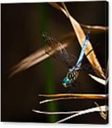 Blue Dasher Dragonfly Canvas Print