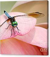 Blue Dasher On A Pink Lotus Canvas Print