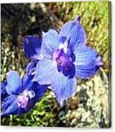 Blue Delphinium Flower Photograph Canvas Print