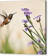 Blue-eyed Grass Wildflowers And Rufous Hummingbird Canvas Print