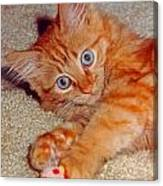 Blue-eyed Kitty Canvas Print