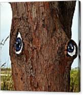 Blue Eyed Pine Canvas Print