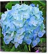 Blue Garden Flower Canvas Print