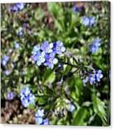 Blue Forget Me Not Canvas Print
