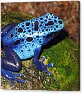 Blue Frog Canvas Print