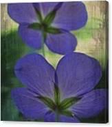 Blue Geranium Canvas Print