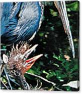 Blue Heron Family Canvas Print