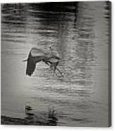 Blue Heron In Platinum Canvas Print