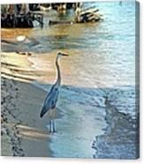 Blue Heron On The Beach Canvas Print