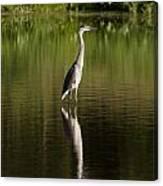 Blue Heron Reflection Canvas Print