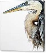 Blue Heron Study Canvas Print