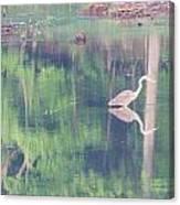 Blue Heron6 Canvas Print
