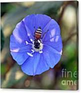 Blue Honey Bee Flower Canvas Print