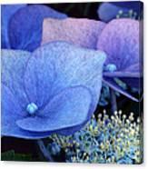 Blue Hydrangea. Canvas Print