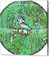 Blue Jay 8 Canvas Print